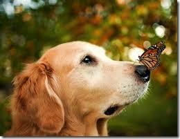 Centrum Edukacyjne - Szklany Dom Świętokrzyskie Kochajmy mądrze nasze zwierzaki