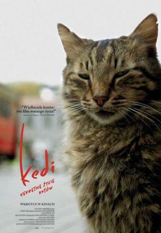 Helios Kino Kedi - sekretne życie kotów / Kino Konesera