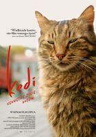 Kedi. Sekretne życie kotów / pokaz przedpremierowy_Kino Moskwa