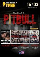 Maraton Pitbulla_
